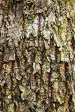 Old Wood Tree Texture Background. Pattern Royalty Free Stock Photos