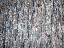 Old Wood Tree Texture Royalty Free Stock Photos