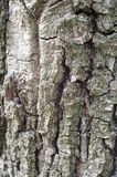 Old Wood Tree Texture Background Pattern Royalty Free Stock Photography