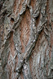 Old Wood Tree Texture Background Pattern. Vertical image.  Royalty Free Stock Images
