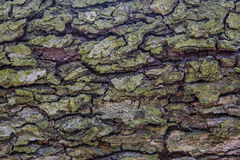 Old Wood Tree trunk Textured Pattern Stock Photo