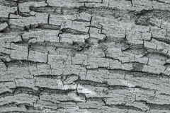 Old Wood Tree trunk Textured Pattern Stock Image