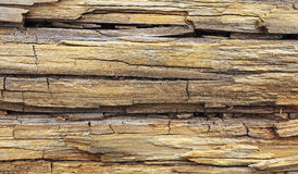 Old wood trunk on beach Royalty Free Stock Photos