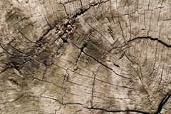 Old wood veins Royalty Free Stock Photography