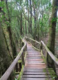 Old wood walking path  through the jungle Stock Image