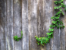 Old Wood wall Stock Photos