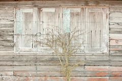 Old wood wall and close window with tree. The old wood wall and close window with tree stock photo