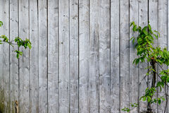 Old wood wall Royalty Free Stock Photos