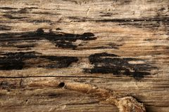 Old wood weathered and grunge. Old rough and weathered wooden surface close up, textured and detailed royalty free stock photography