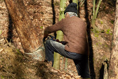Old woodcutter at work with chainsaw Royalty Free Stock Image