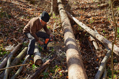 Old woodcutter at work with chainsaw Stock Image