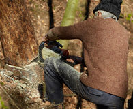 Old woodcutter at work with chainsaw Stock Images