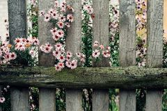 The old wooded fence with flower Royalty Free Stock Images