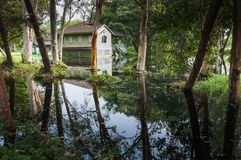 Old wooden abandoned house in a jungle with flooded from the lak Royalty Free Stock Photos