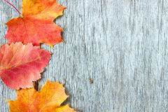 Old wooden background and  autumnal leaves Royalty Free Stock Image
