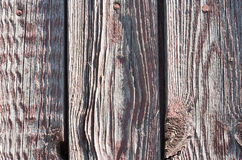 Old wooden background. Color Background old dyed shabby texture wood with knots Stock Images