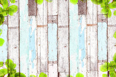 Old wooden background with green tree frame Royalty Free Stock Images