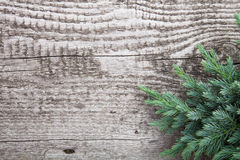 Old wooden background with pine branch, image of flooring board Royalty Free Stock Photos