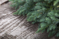 Old wooden background with pine branch, image of flooring board Royalty Free Stock Images