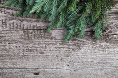 Old wooden background with pine branch, image of flooring board Royalty Free Stock Photo