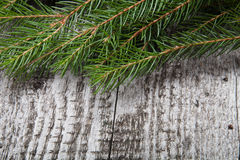 Old wooden background with pine branch, image of flooring board Stock Photo