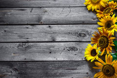 Old wooden background with sunflowers. Old grey wooden background with sunflowers. Selective focus Royalty Free Stock Photo