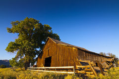 Old Wooden Barn. With tree and beautiful blur skies in morning light Stock Photography