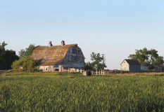 Old wooden barn and barnyard. Large old American prairie wooden barn and barnyard, with long grass in the foreground and a blue sky Royalty Free Stock Photography