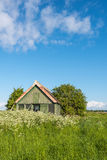Old wooden barn overgrown with weeds. Landscape in springtime with an old abandoned wooden barn with chipped paintwork in the middel of wild growing plants and Royalty Free Stock Photography