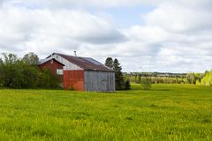 Old wooden barns set in field covered in dandelion in bloom with wooded area in the backgroun. D, Sainte-Marguerite, Beauce, Quebec, Canada royalty free stock photo