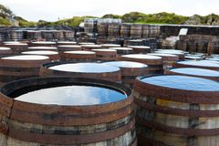 Old wooden barrels and casks with single malt Scotch at whisky distillery in Scotland. Old wooden barrels and casks stand under open sky maturing Scotch single royalty free stock image