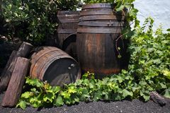 Old wooden barrels of wine Royalty Free Stock Photography
