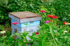 Old wooden beehives in the garden and some flower. Selective focus to hive Stock Images