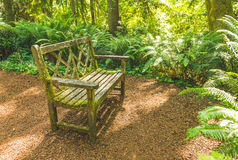 A old wooden bench in the beautiful botanical garden with sunlight shadow and shade in the day  time.. Royalty Free Stock Photography