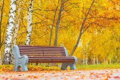 Old wooden bench in city park. natural vintage autumn background Royalty Free Stock Image