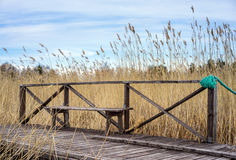 Old wooden bench. In the coastal zone on dry grass background Royalty Free Stock Photography