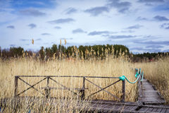 Old wooden bench. In the coastal zone on dry grass background Stock Images
