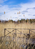 Old wooden bench. In the coastal zone on dry grass background Stock Photo