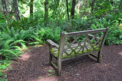 Old wooden bench in forest Royalty Free Stock Images
