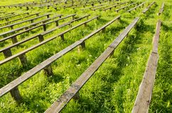 Old wooden bench and grass Stock Image