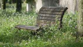 An old wooden bench with Trifolium pratense stock footage