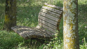 An old wooden bench with Trifolium pratense stock video footage