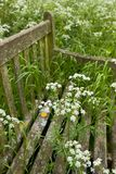 Old Wooden Bench with wild flowers. Selective focus Stock Image