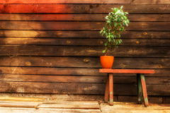 Old wooden bench Stock Images