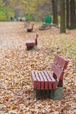 Old wooden benches in city park. Stock Images