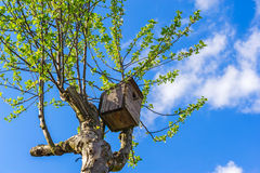 Old wooden bird house. On a tree against blue sky royalty free stock photography