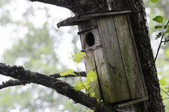 Old wooden birdhouse on a tree Royalty Free Stock Photo