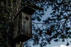 Old wooden birdhouse on a tree in a forest stock image