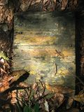 Old wooden board. Surrounded and covered by leaves stock photos