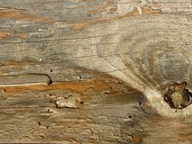 Old wooden Board eaten by worms and beetles. Suitable for rustic style background. Space for text. Wood texture yellow grey colours royalty free stock images
